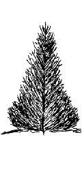 pyramidal evergreen tree shape.jpg