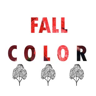 FALL COLOR TREES
