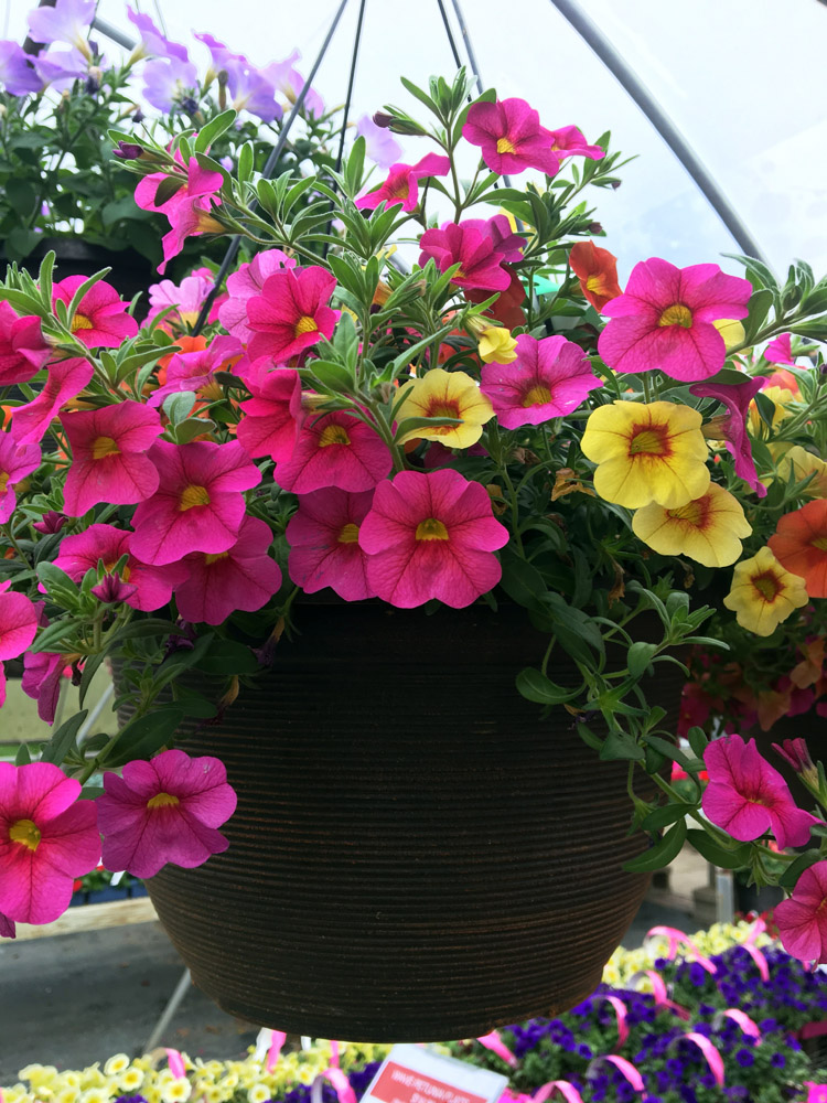 GREEN HOUSE ANNUALS