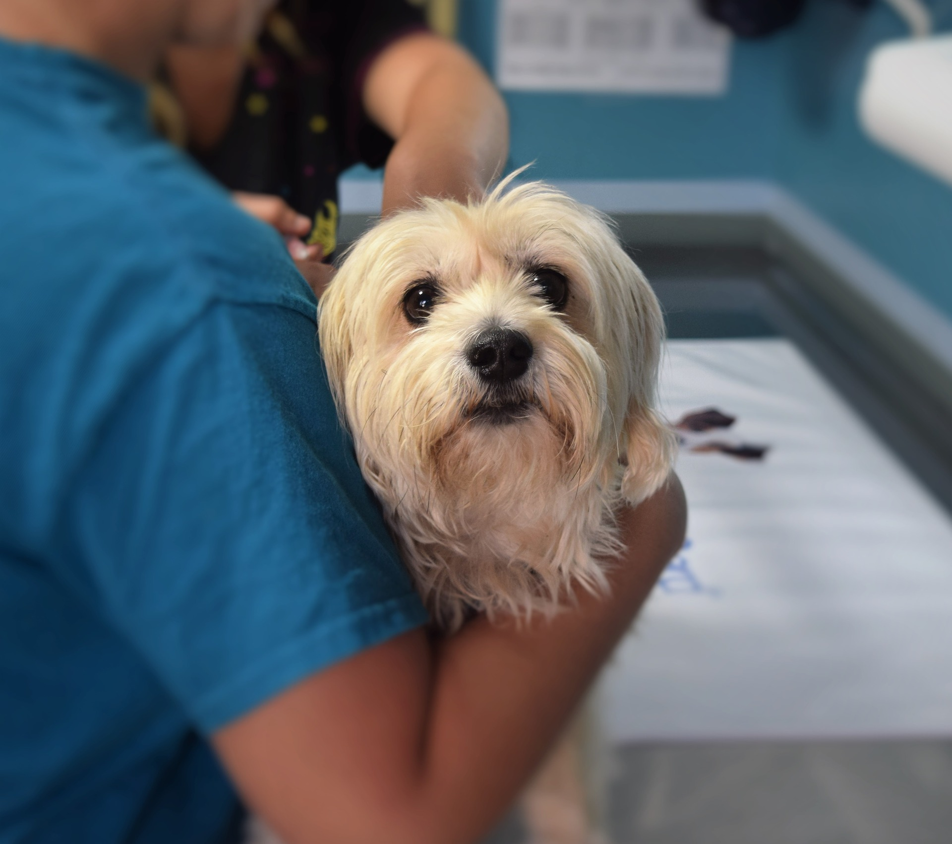 Bring your pets to our monthly low-cost vaccine clinics on the third Sunday of every month from 11am-3pm.