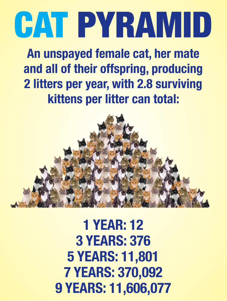 CatSpayPyramid-SpayBatonRouge.jpg