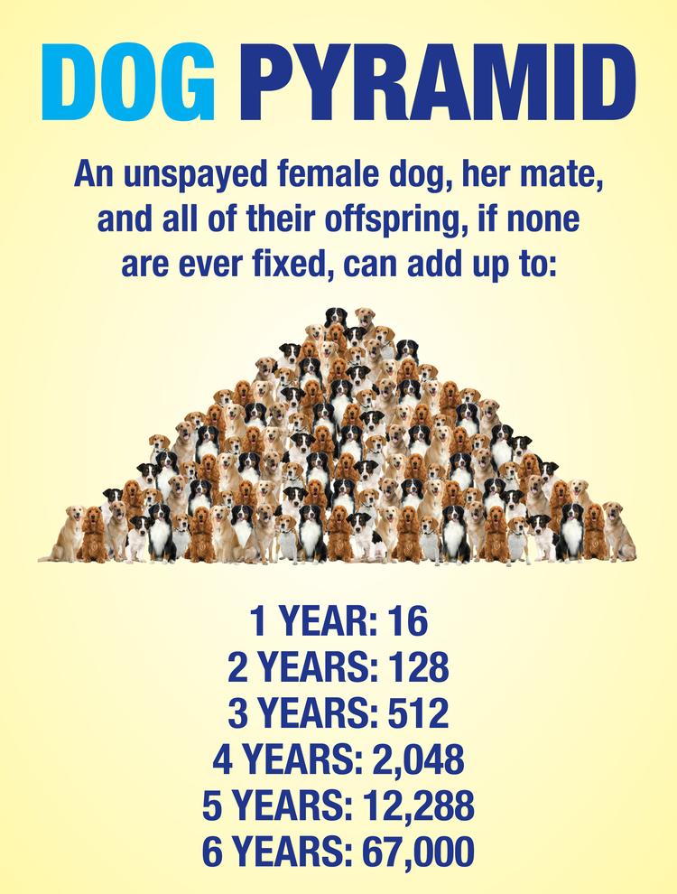 DogSpayPyramid-SpayBatonRouge.jpg