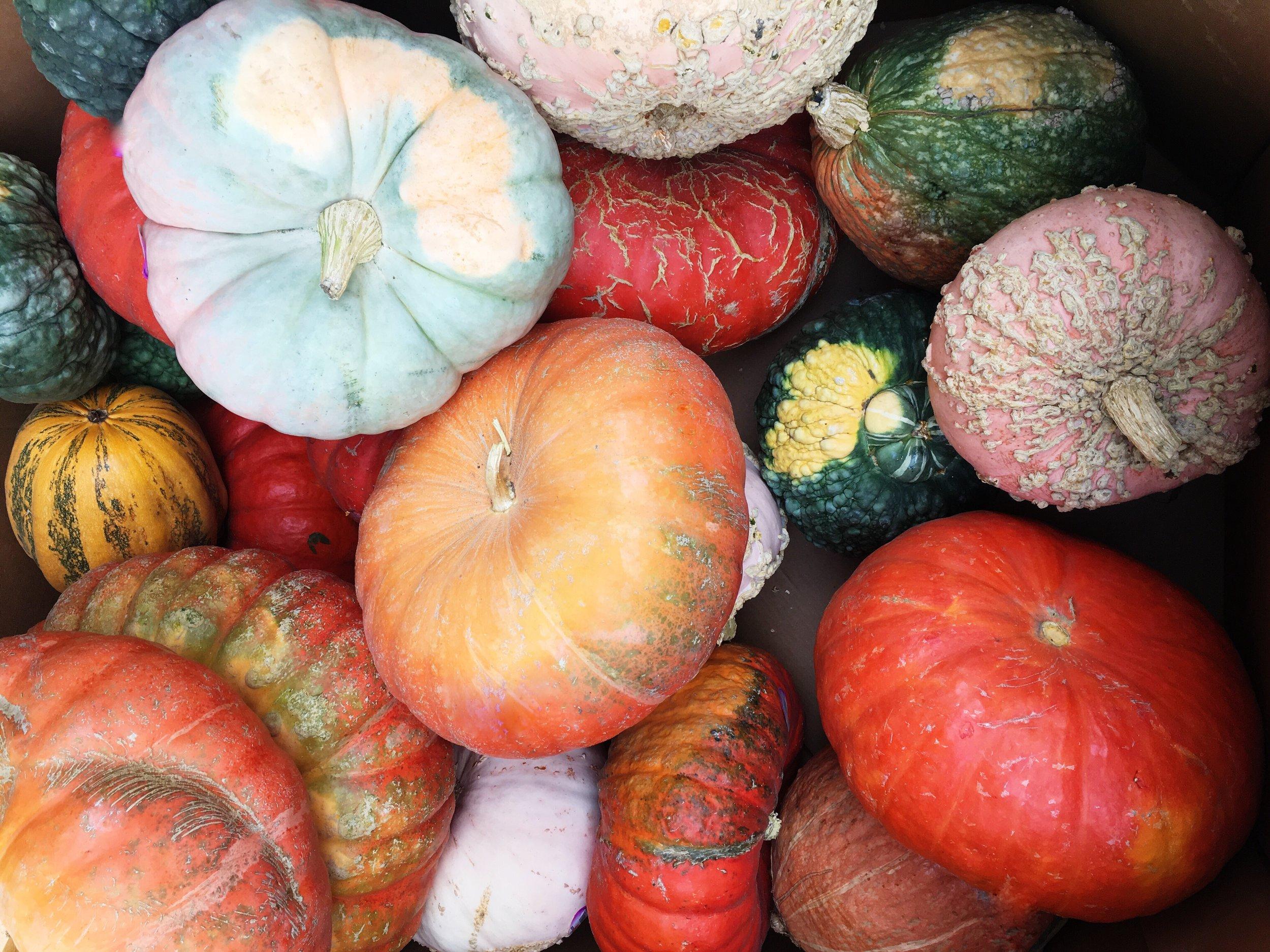 Fall_Pumpkins.JPG