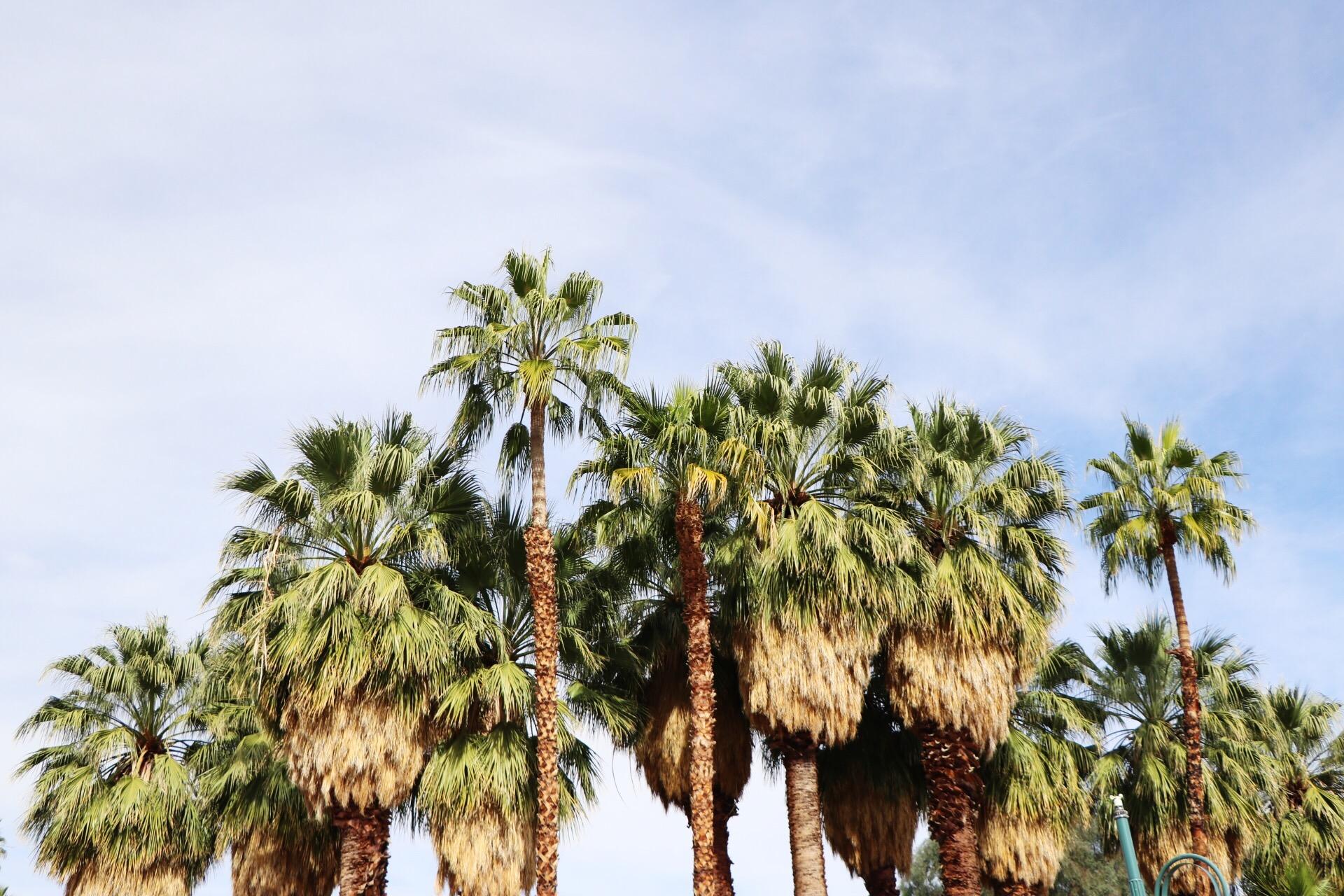 PalmSprings4.JPG
