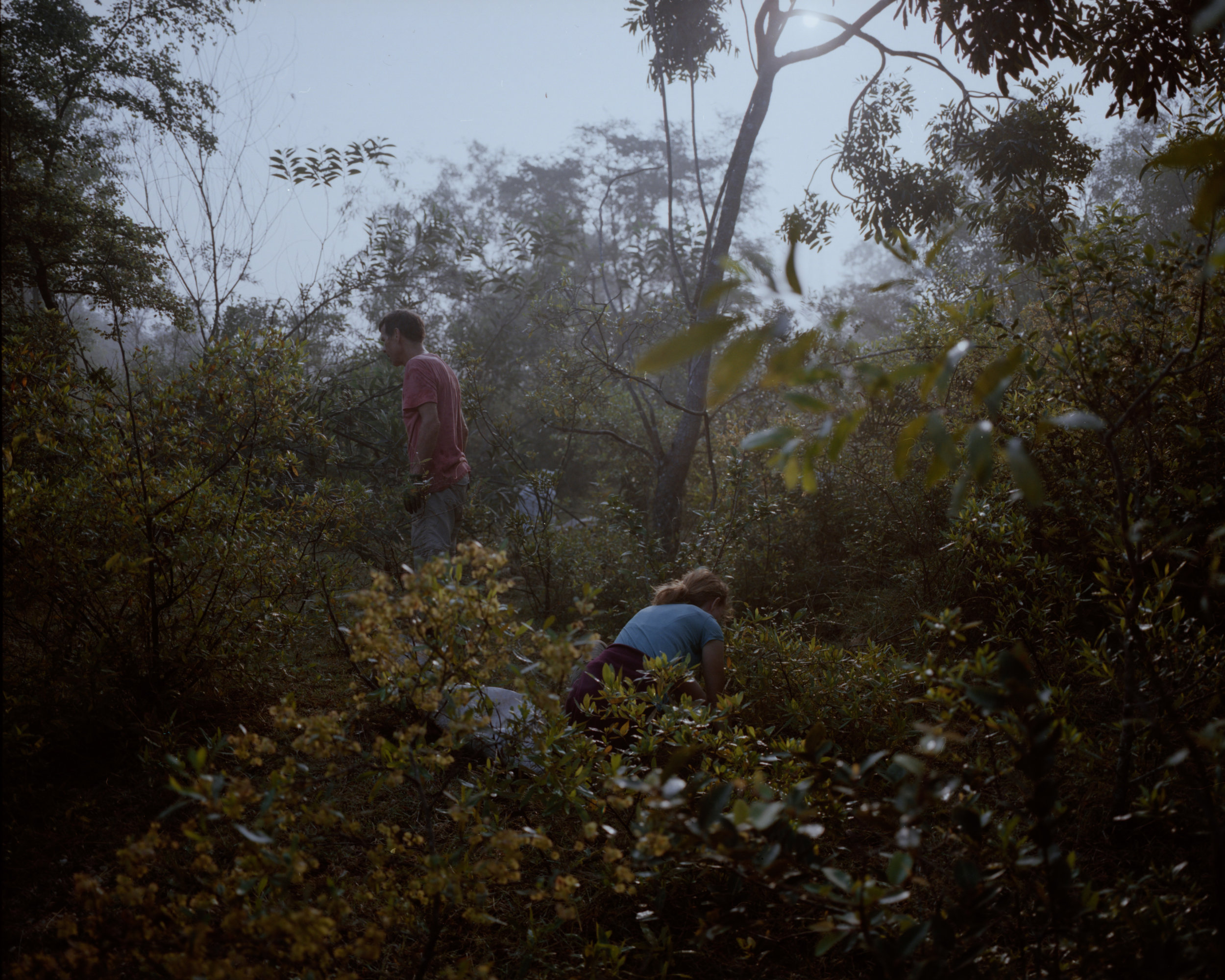 Pierre and Marianne hunting for old saplings. Full Shade/Half Sun. Image by Néha Hirve.