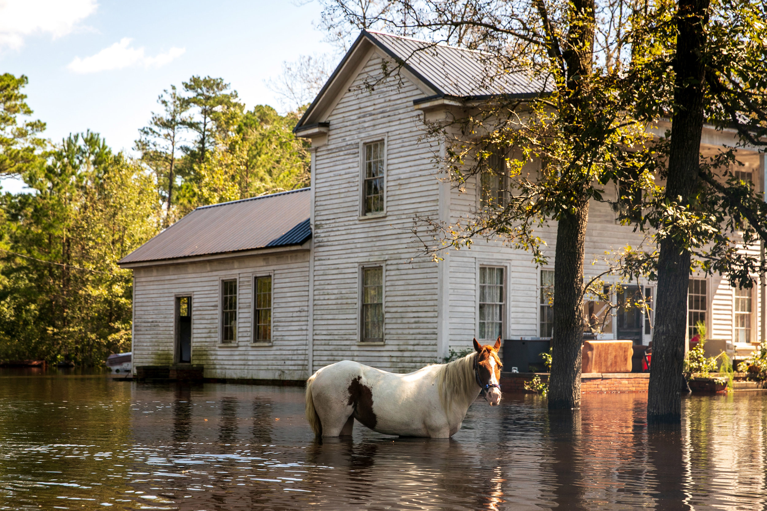 ILANA PANICH-LINSMAN  www.ilanapl.com  |  @ilanapl   Thomas and Autumn Brown try and bring a neighbor's horse, Lady, to higher ground in Ivanhoe, NC, USA in the aftermath of Hurricane Florence.  From The New York Times:    Submerged by Florence, North Carolina's Rural Towns Fight for Attention