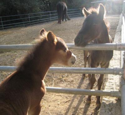 Baby Skyrian ponies are pretty darn adorable