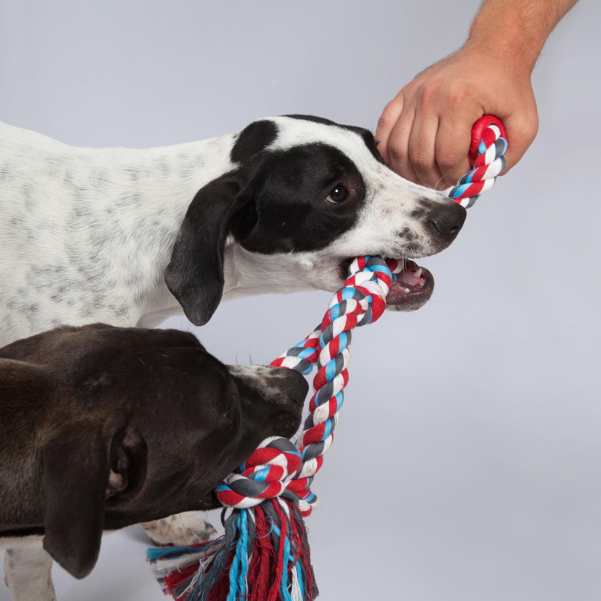 dogzilla-dog-toys-rope-nicholas-baker