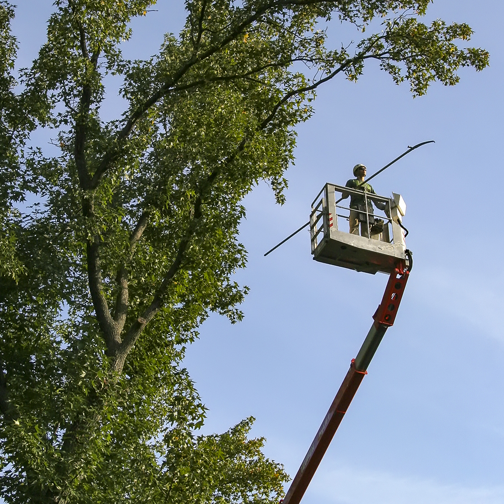 st. louis tree care page_0001.jpg
