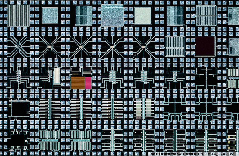 Lomo-3,7x-Objective-Sony-A6300-Stack-Zerene-DMap-Robert-OToole-Closeuphotography-1500px.JPG