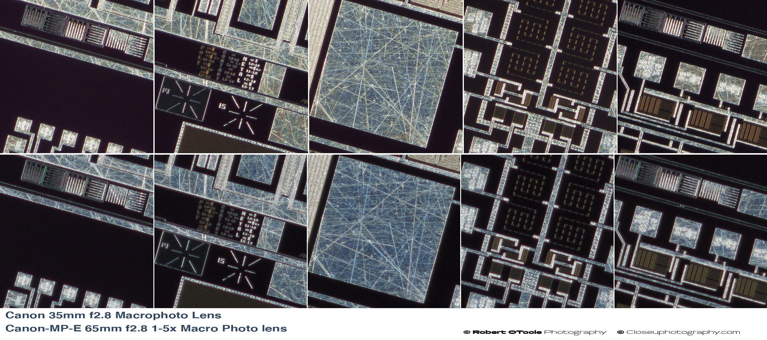 Canon-35mm-F2.8-Macrophoto-Lens-versus-Canon-MP-E-65mm-f2.8-1-5x-Macro-Photo-lens-100-percent-crops.jpg