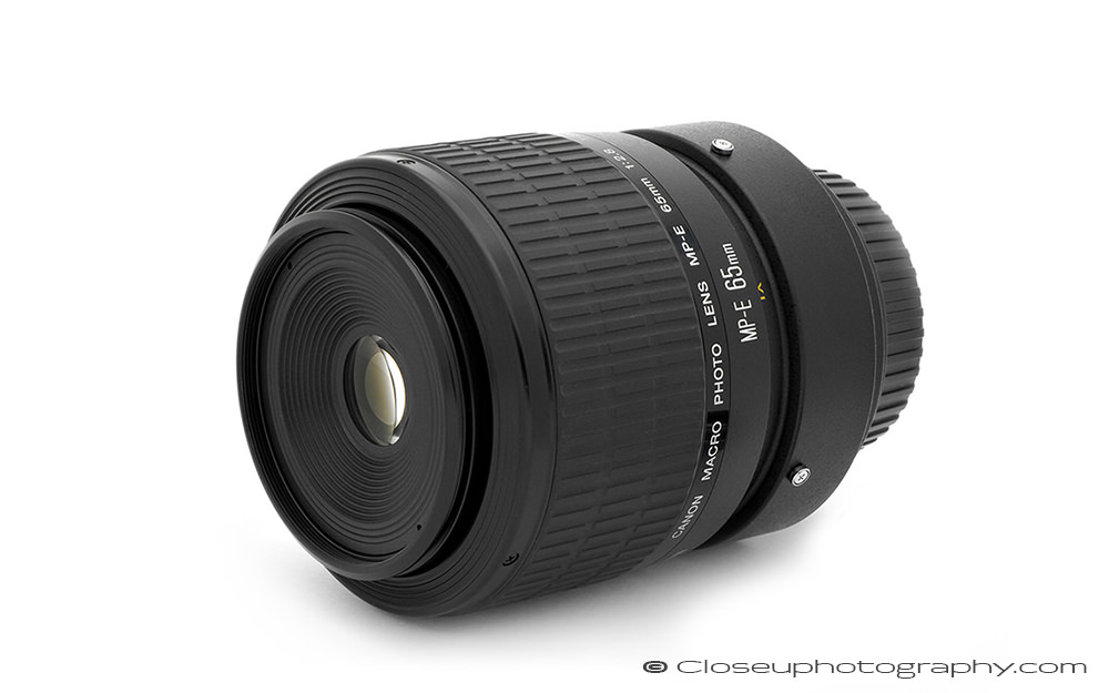 Canon-MPE-65-Macro-lens-Robert-OToole-Photography.jpg