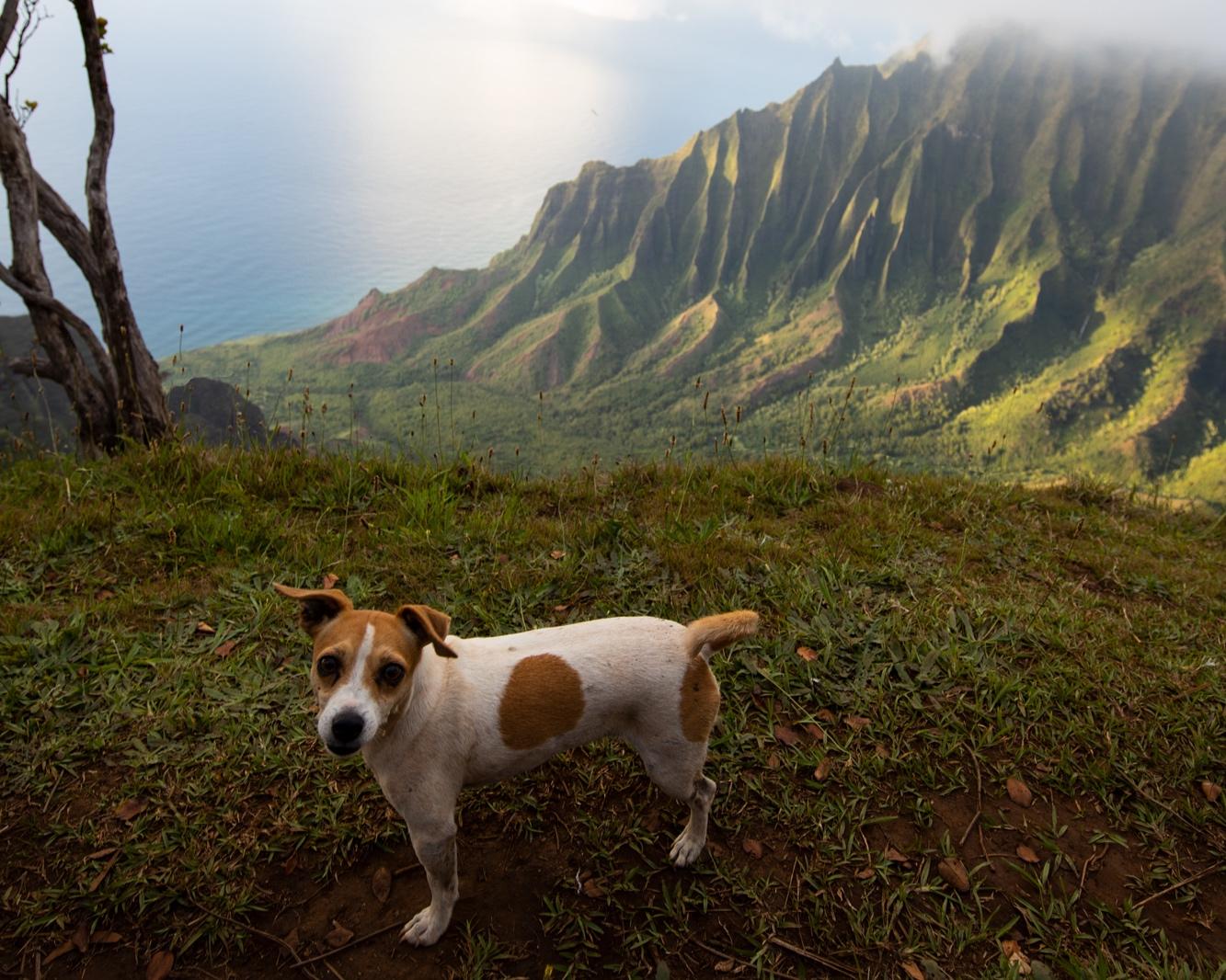 Hula the Hunting Dog