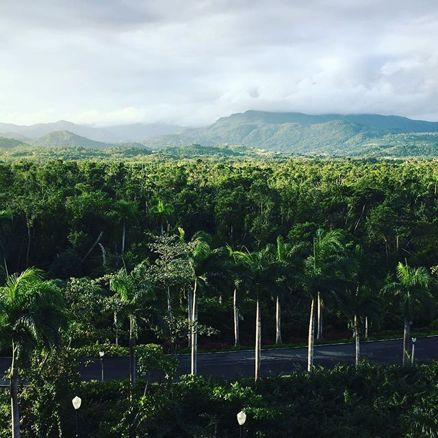 El Yunque Rainforest #greenskybookkeeping #bookkeeping #brooklynbusiness #workanywhere #accounting