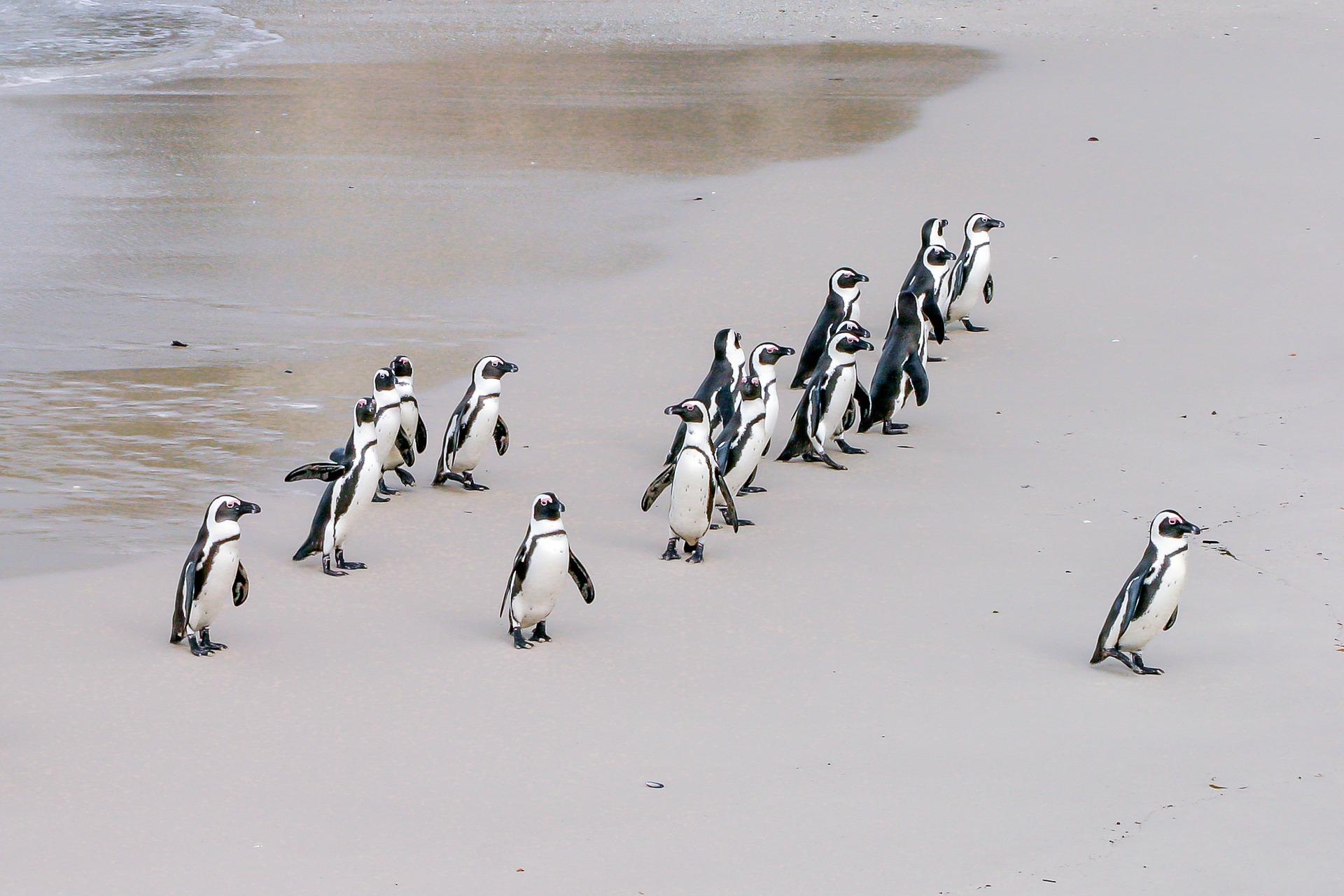 penguin-1719608_1920.jpg