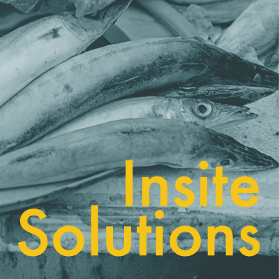 Insite Solutions   Thomas Kraft