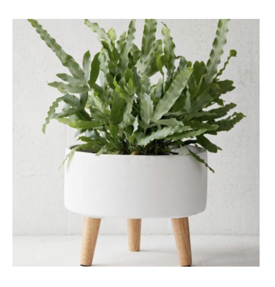 living room: Planter