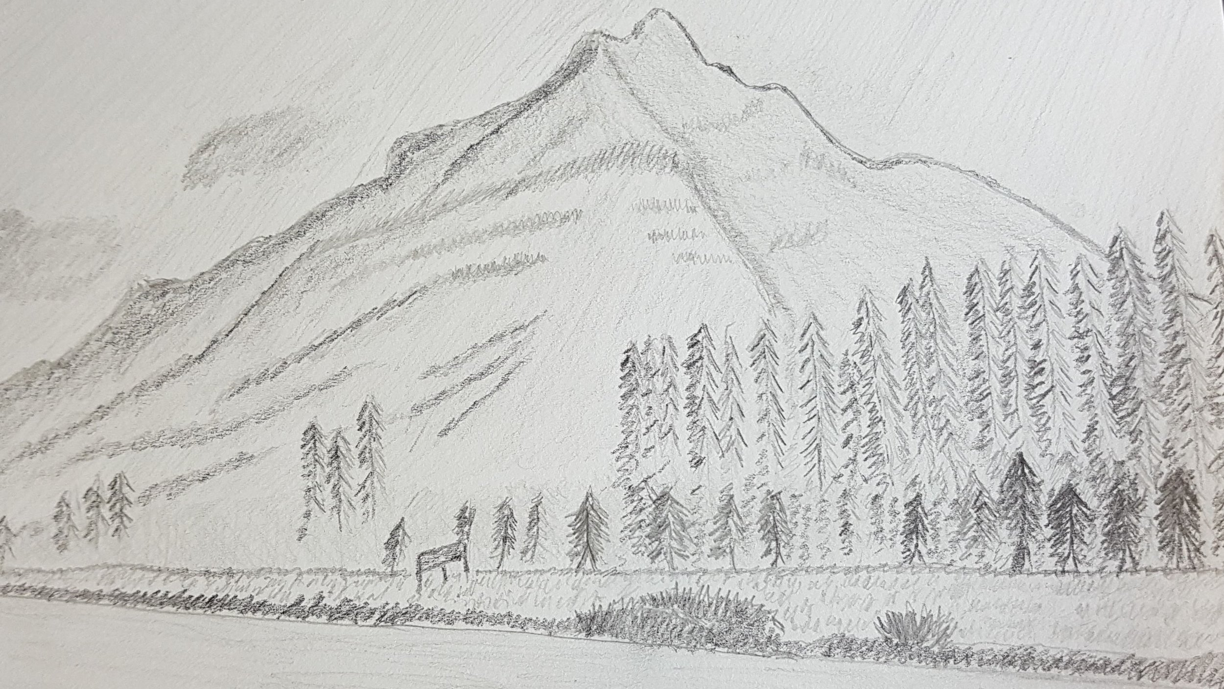Graphite drawing - Moose Meadows, Banff, AB - Kandice Leaf