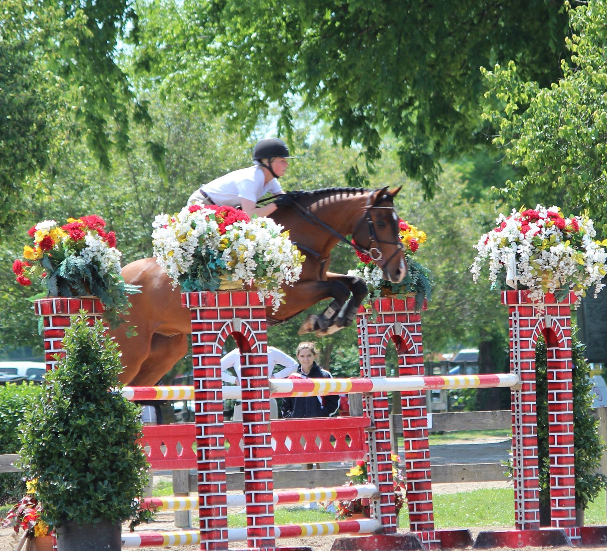 Charlie TFH (Corlando/Escudo II/Rebel Z) Ridden in Picture by Lucy Hart