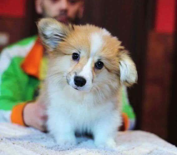 Obba as a pup