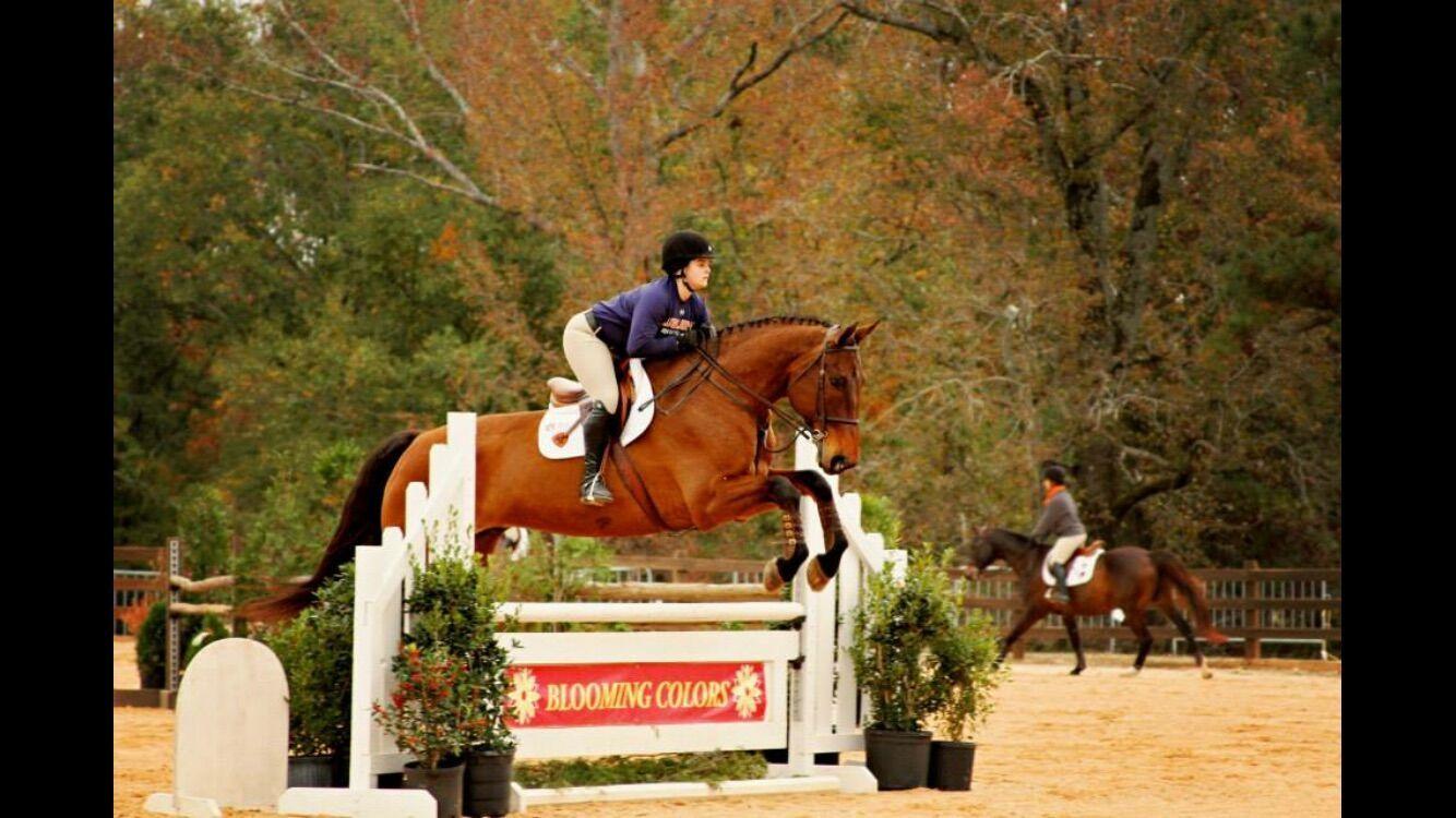 Caroline Horse.jpeg