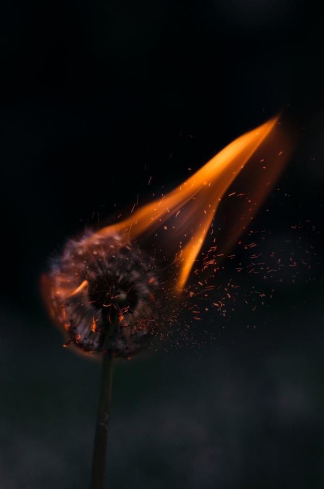PITTA - Fire + Water