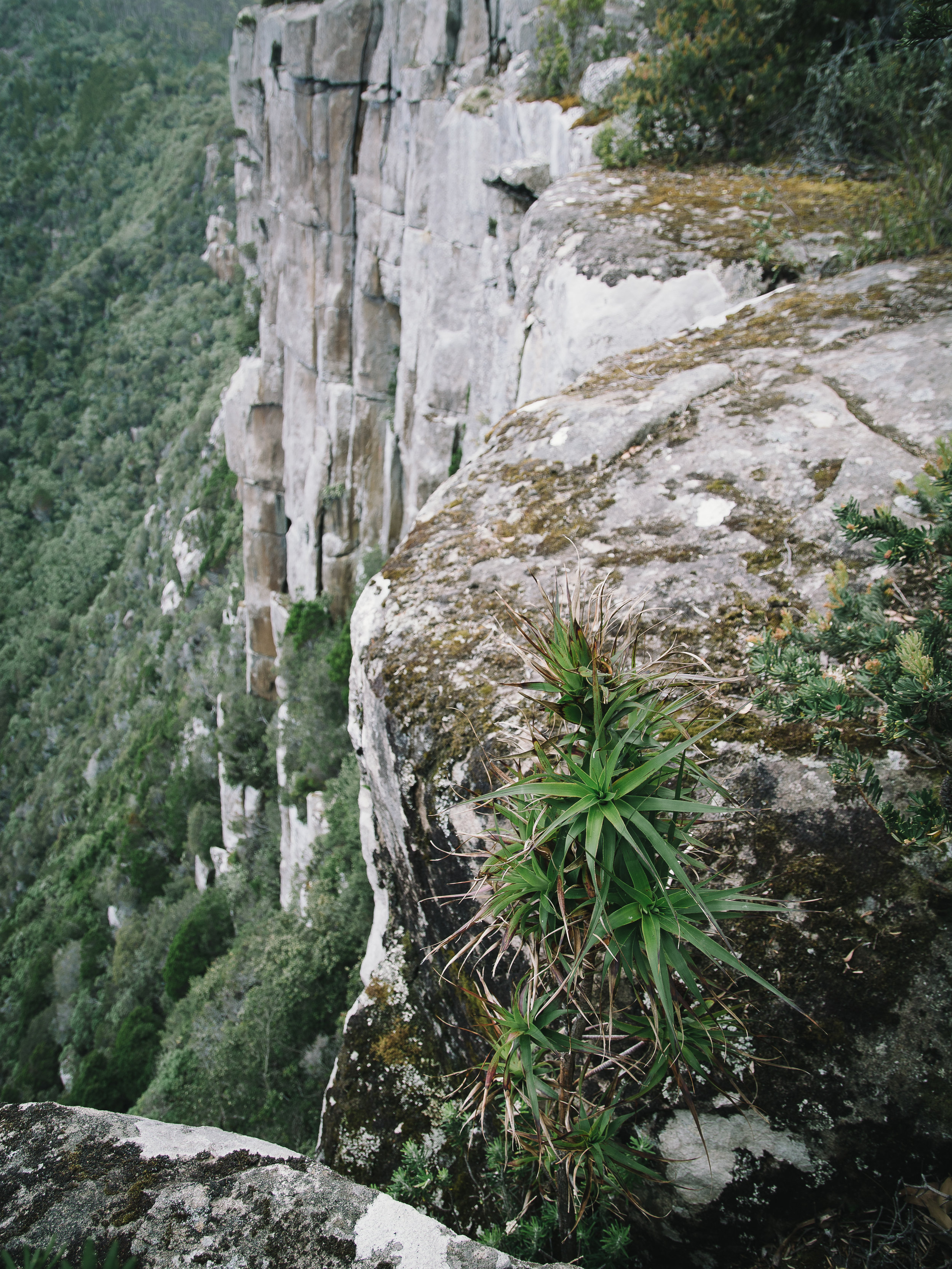 Mount Fortescue-20.jpg
