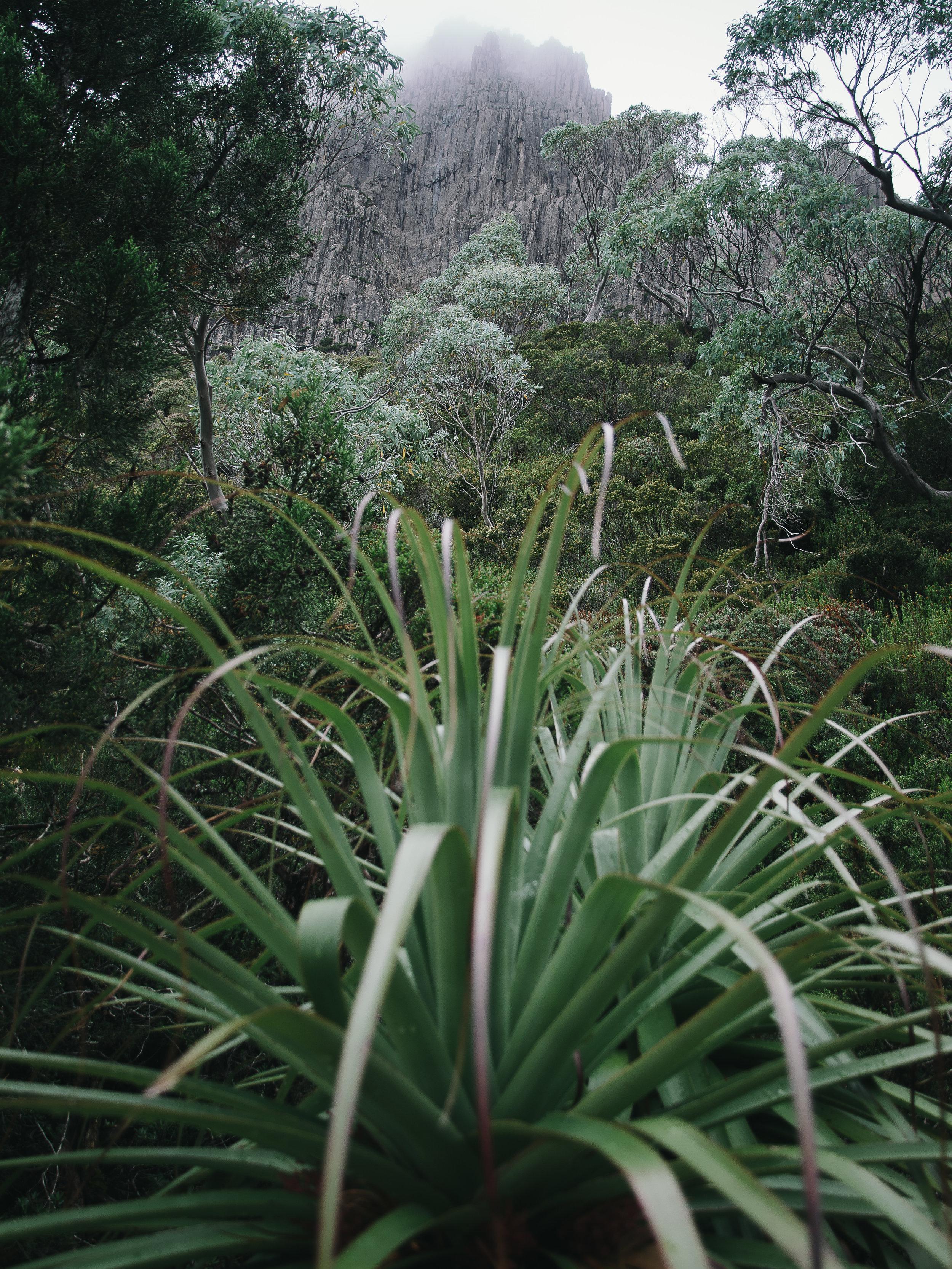 Pandani Cradle Mountain-1.jpg