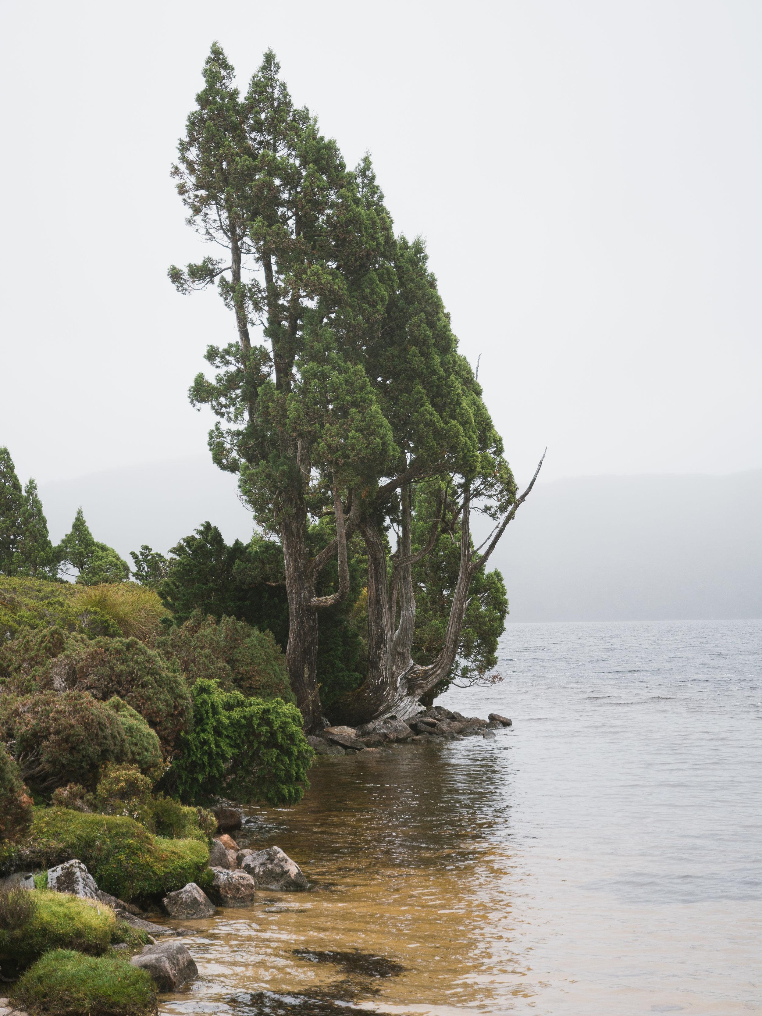 Lake Will-1.jpg
