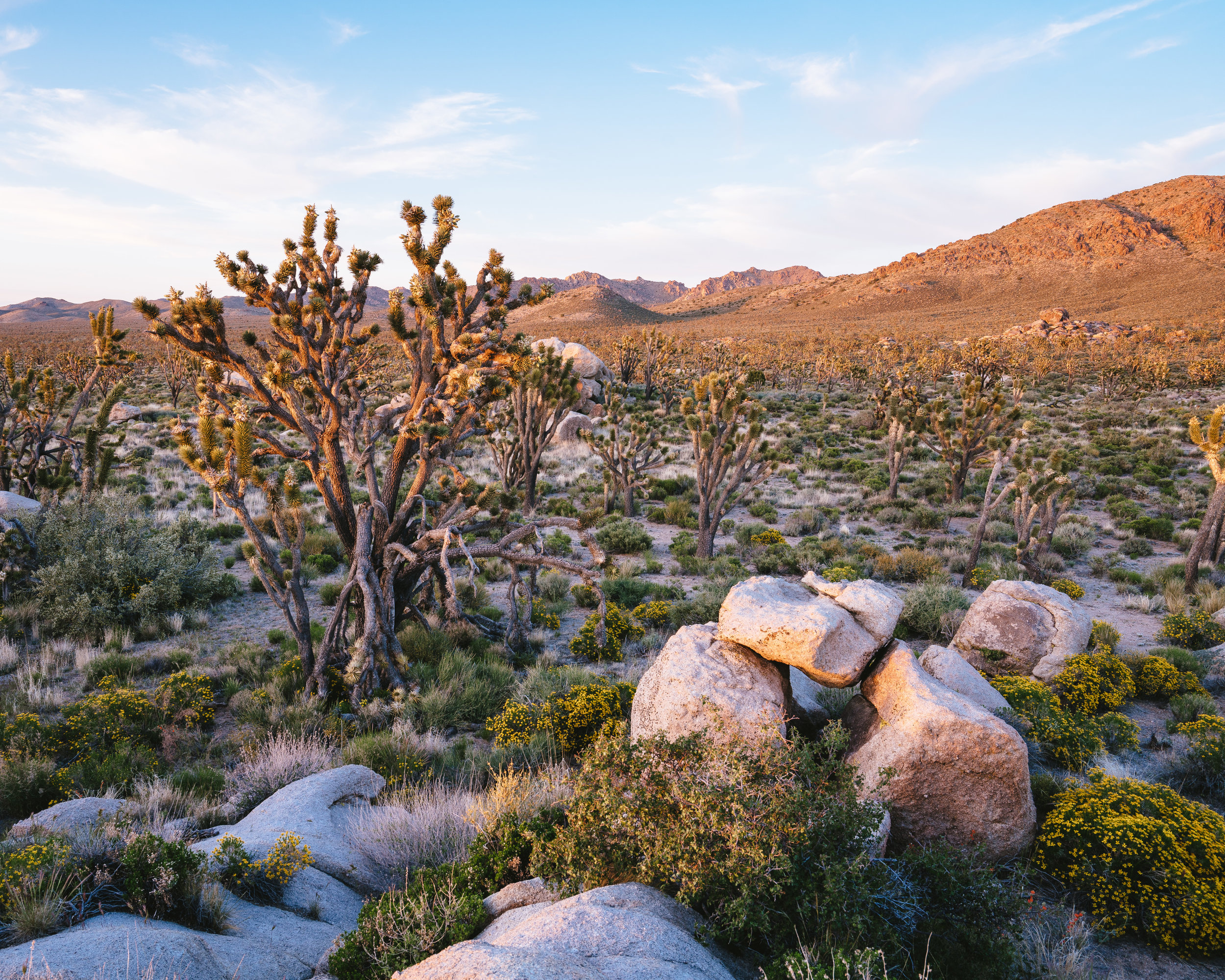 Mojave National Preserve.jpg