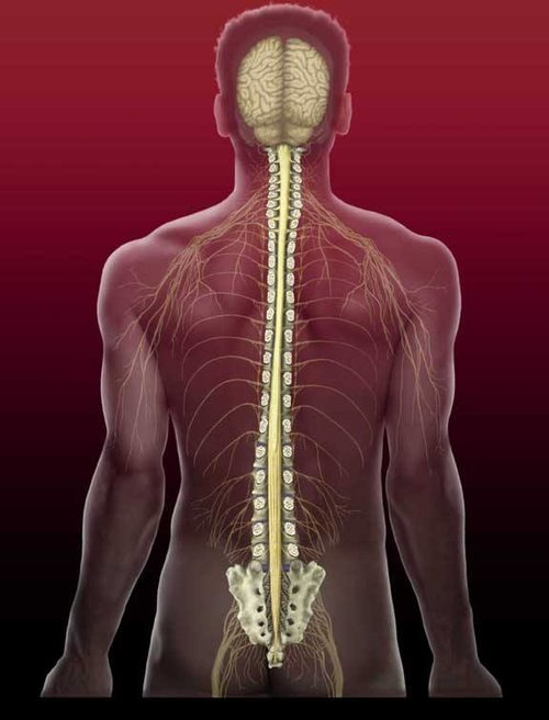 spine orthobionomy