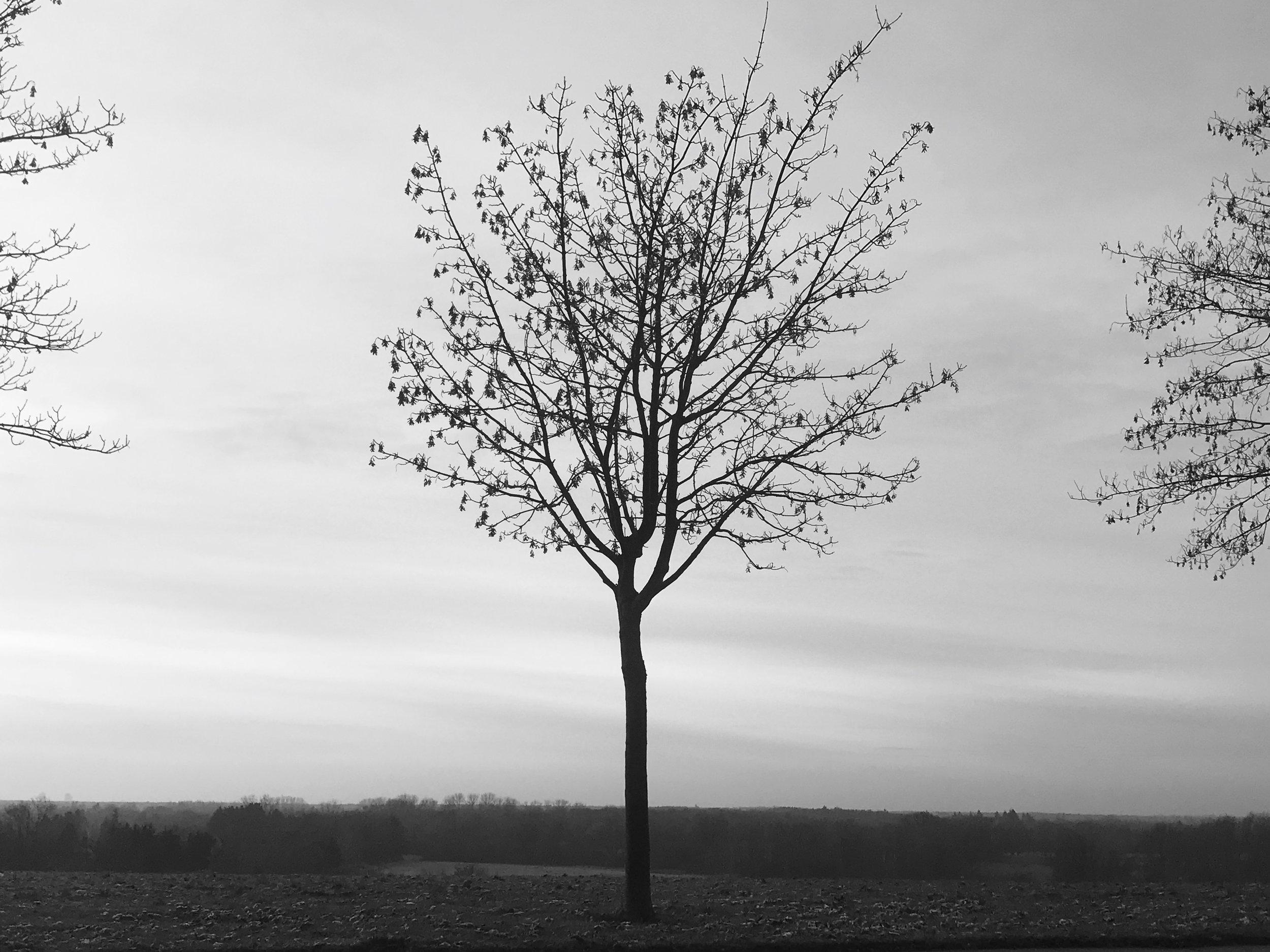 The Skinny Tree.