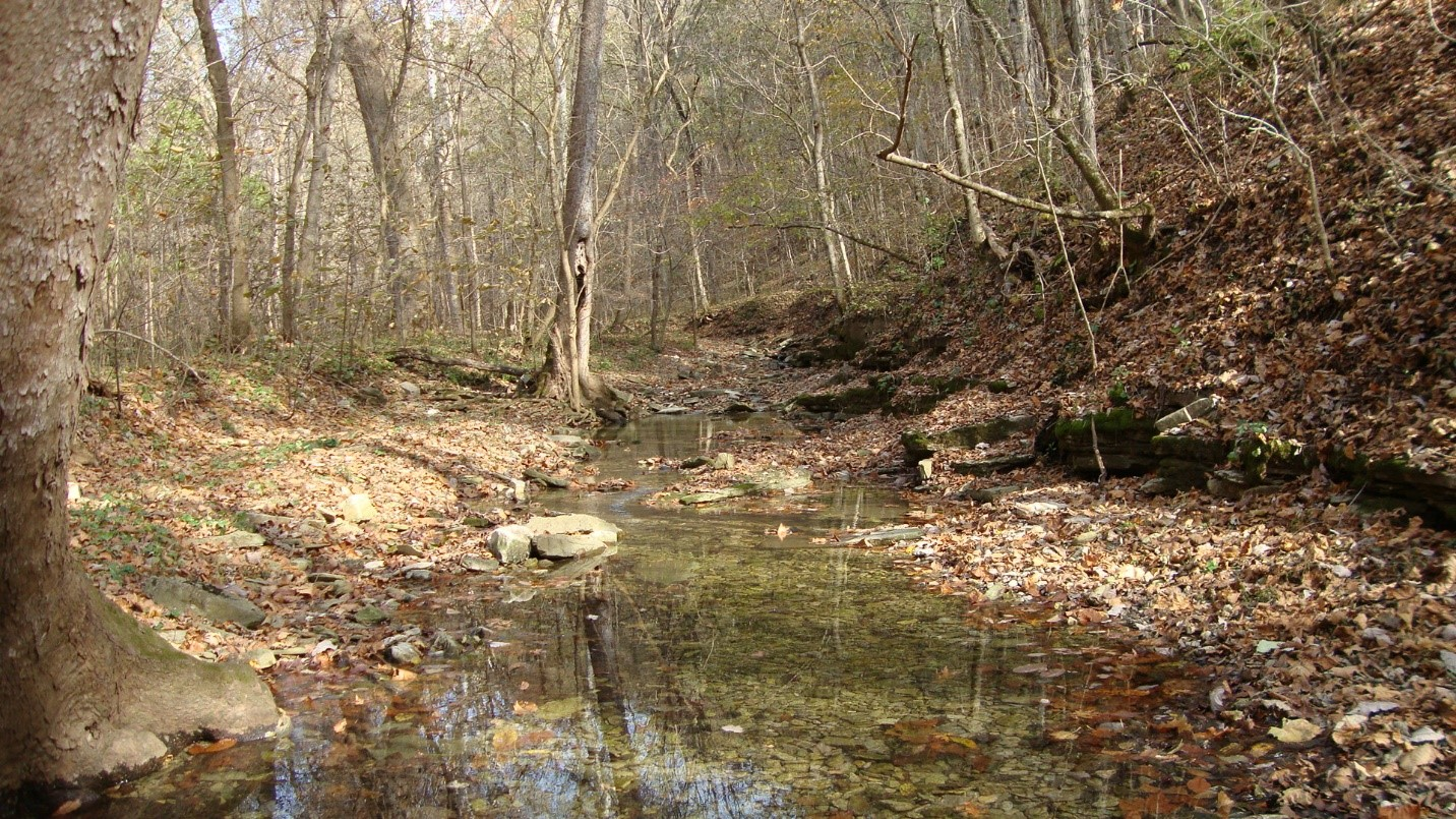 Vaughn's Branch flows through our nature preserve to the Kentucky River.Photo by Ed Lawrence.