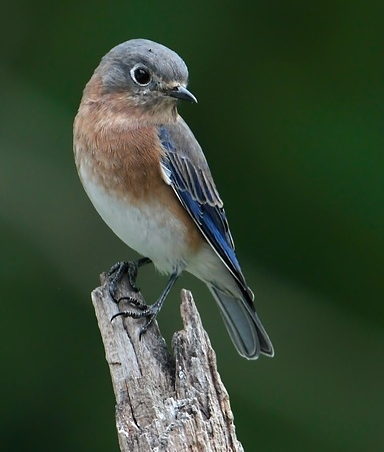 bluebird-3059858_640.jpg