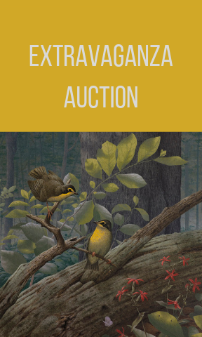 Extravaganza Auction.png