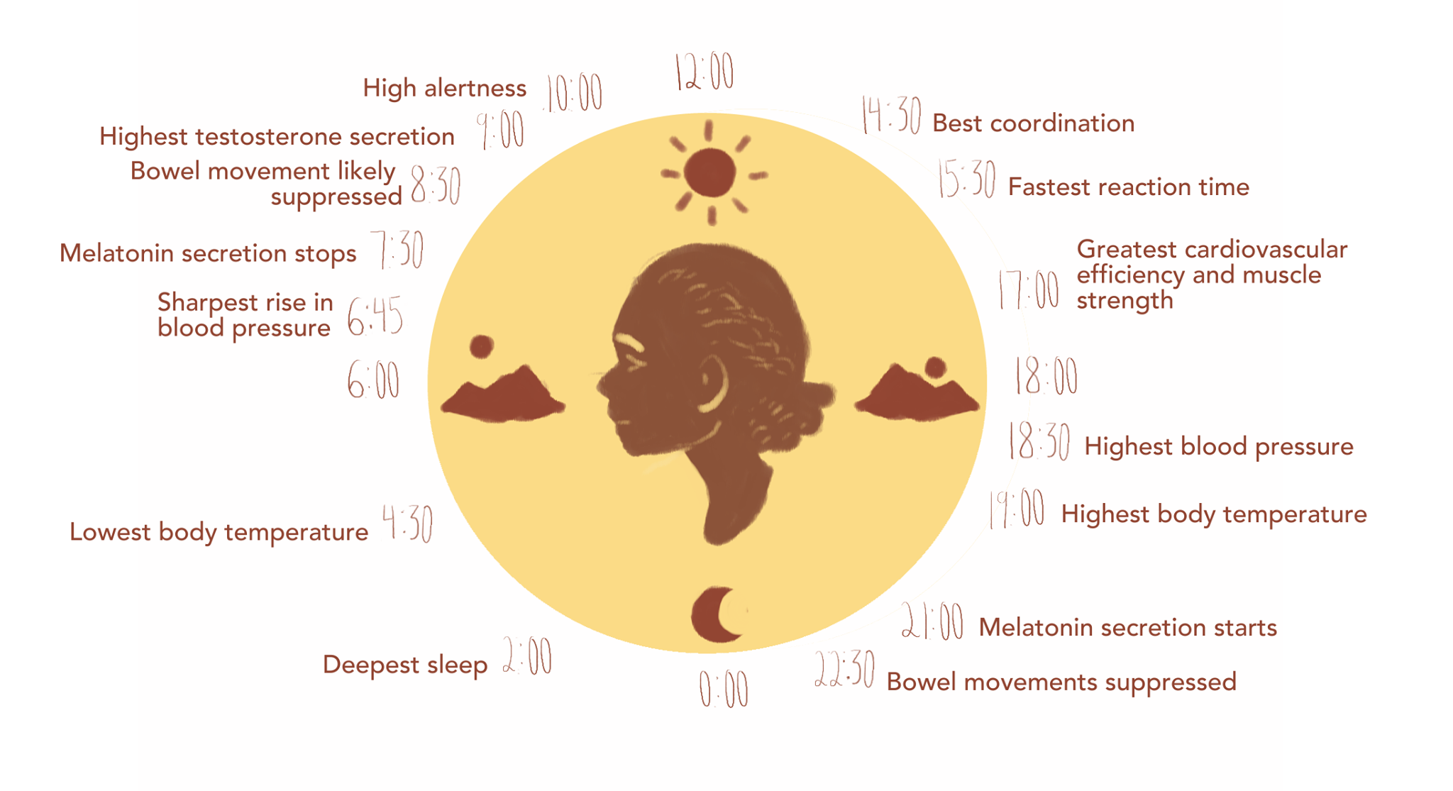 Figure 1: The body naturally follows the 24-hour clock due to the circadian rhythm stimulated by changes in light.
