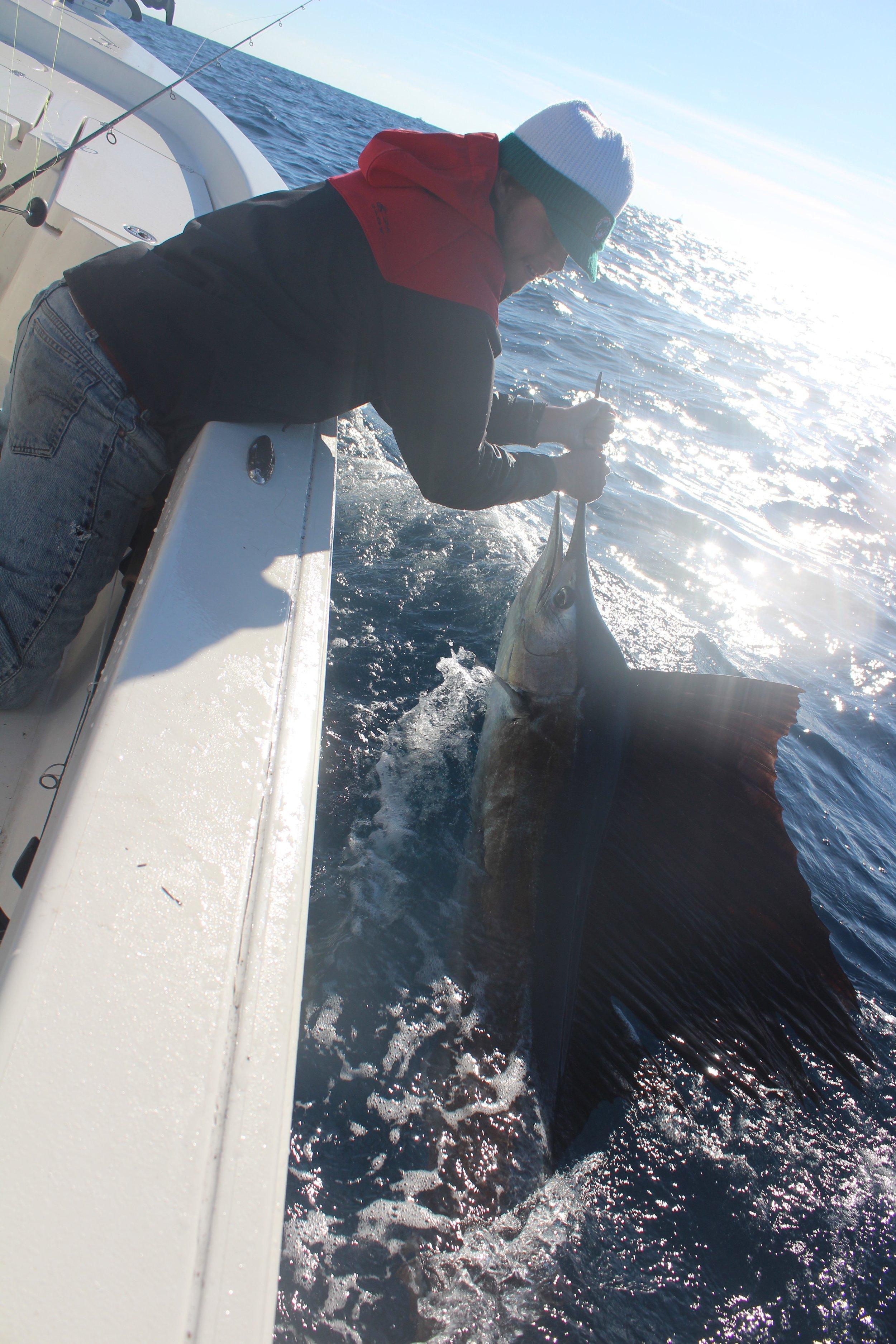 Sailfish on the Bay Boat