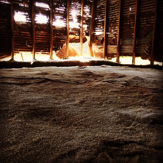 Salted hides in the Hide House