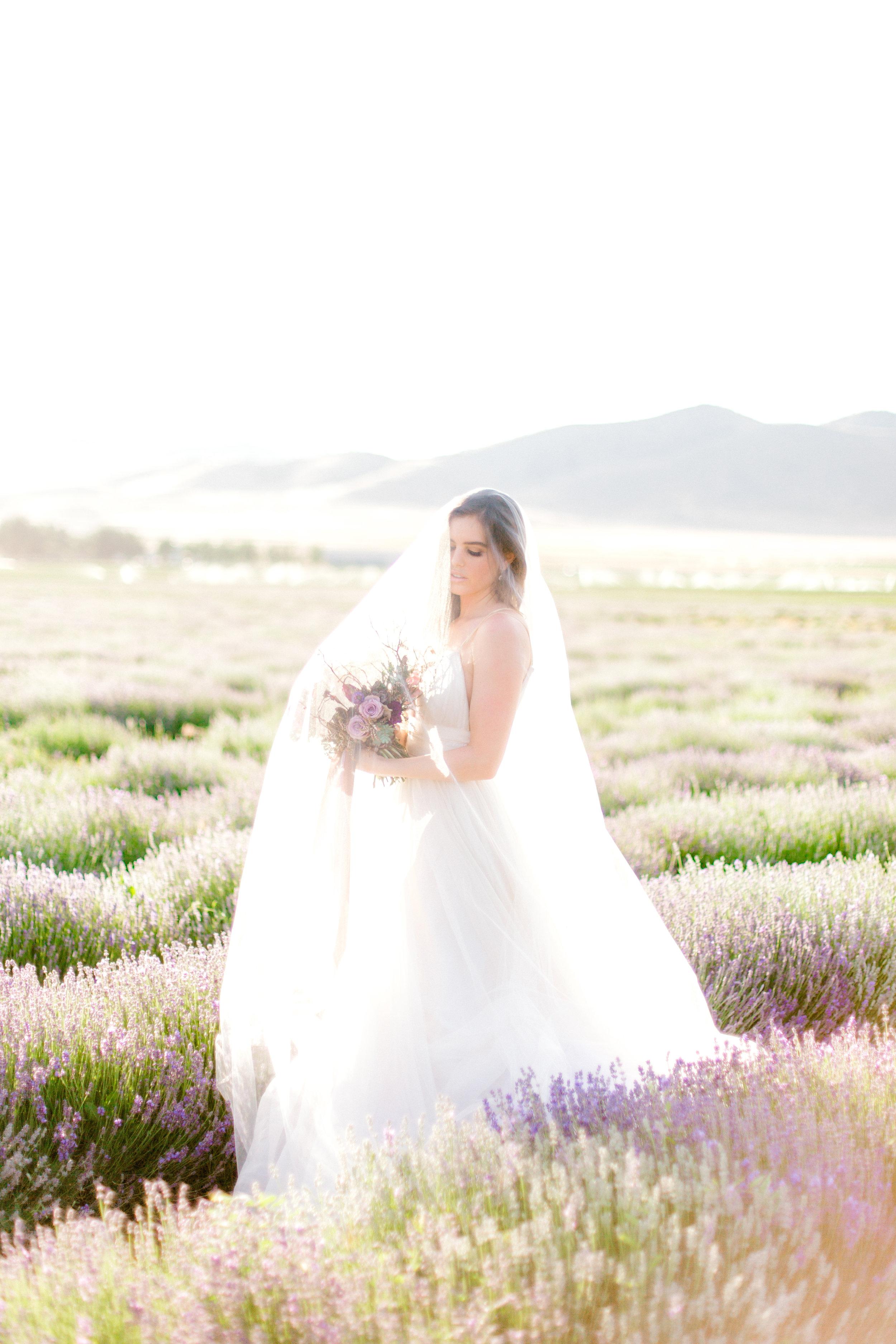 LavenderFeildsTiffanySangsterPhotography-4.jpg