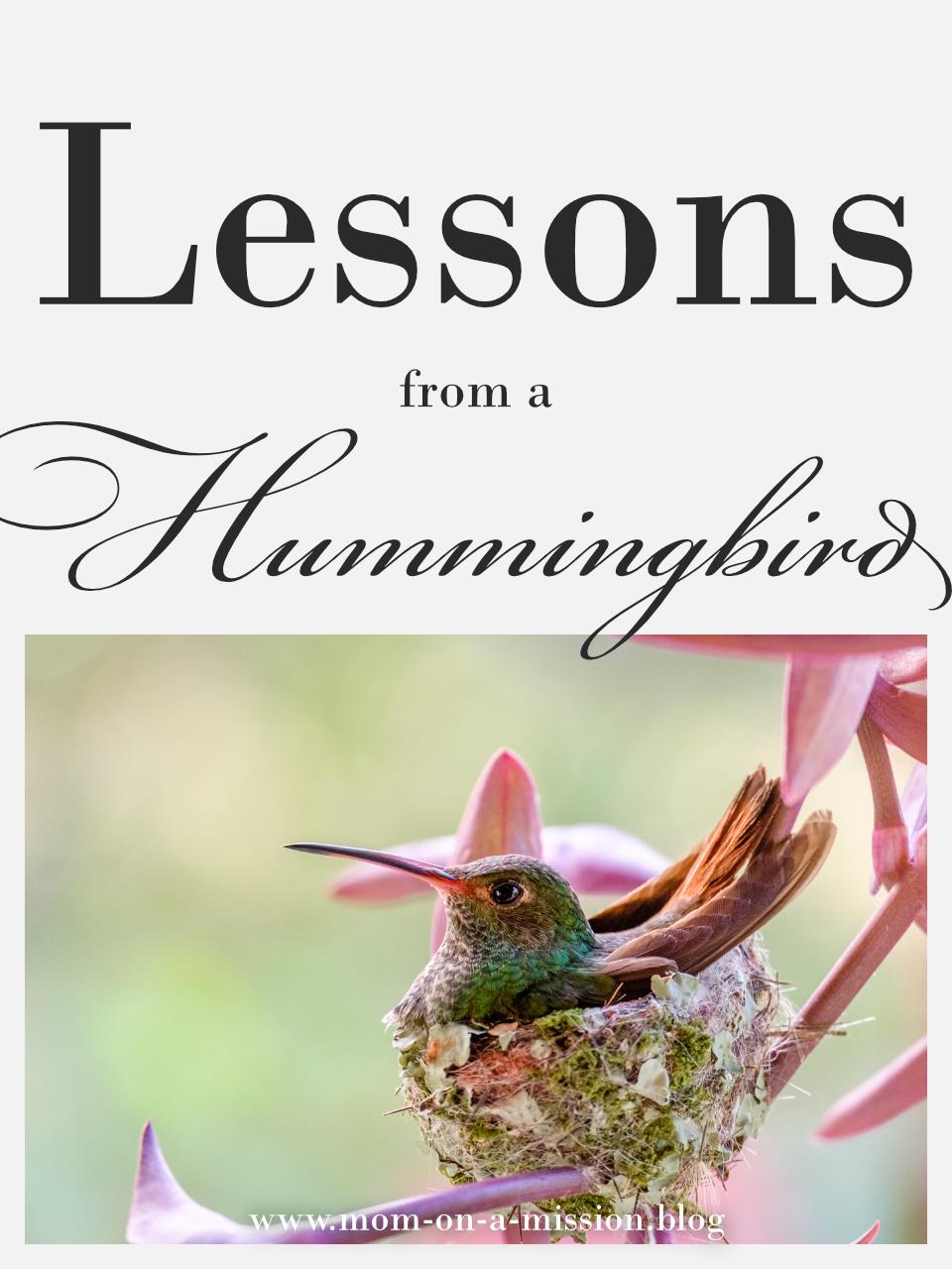 Lessons from a Hummingbird  #momonamissionblog #hummingbird #lifelessons