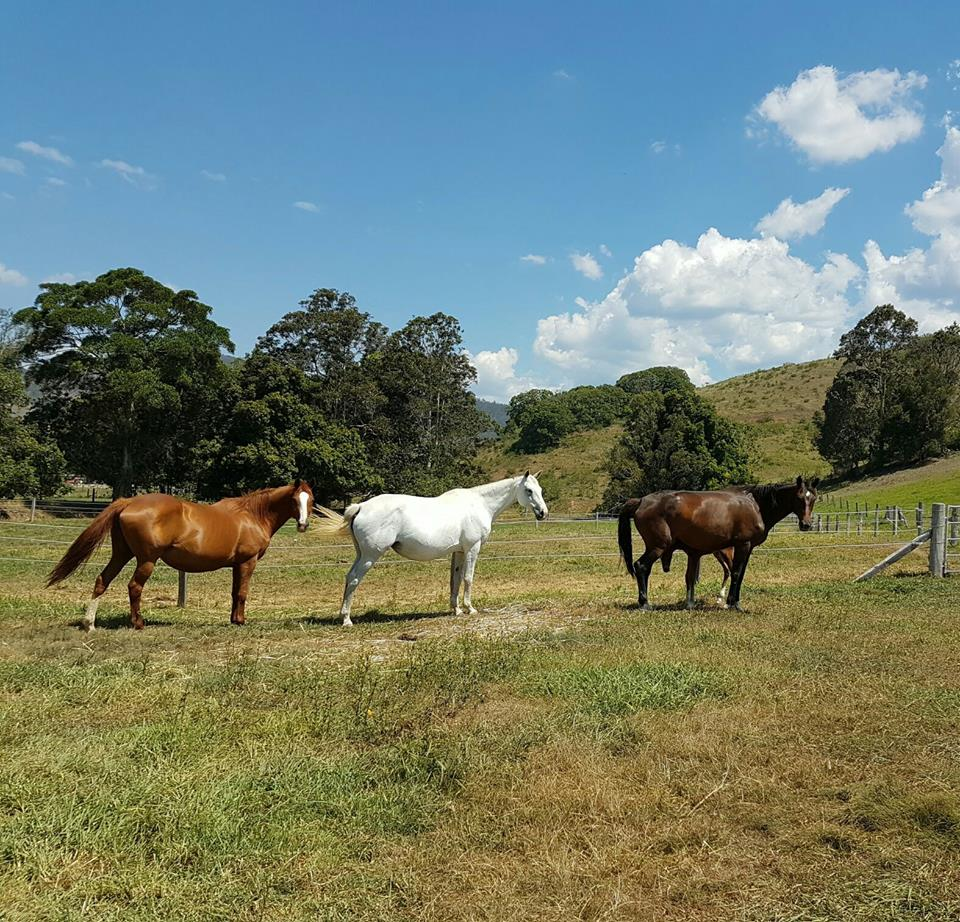 Broodmares ready to foal
