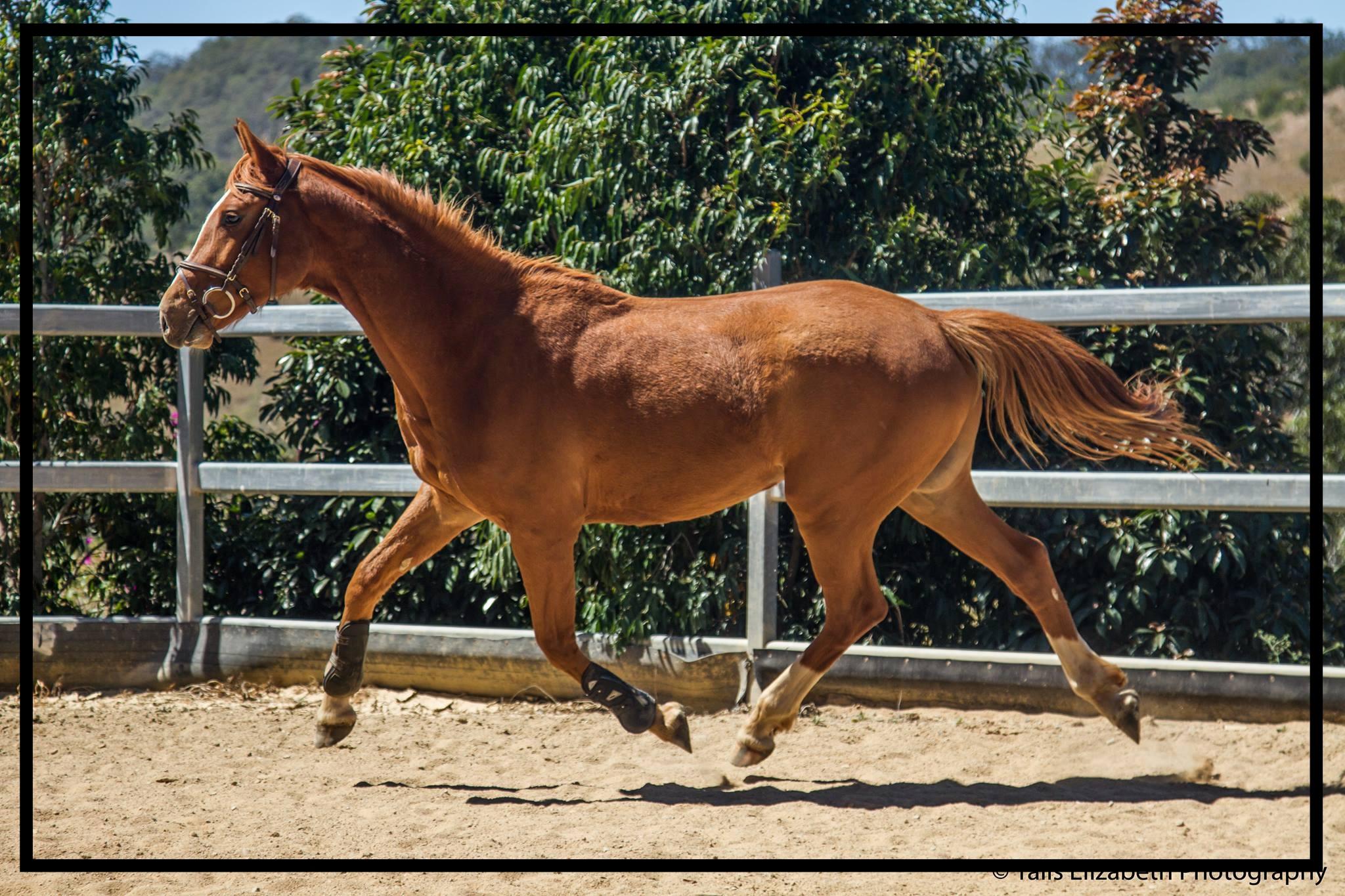 'Vertical Valley Splodge' one of the young horses sold by Vertical Valley Equine Sevices