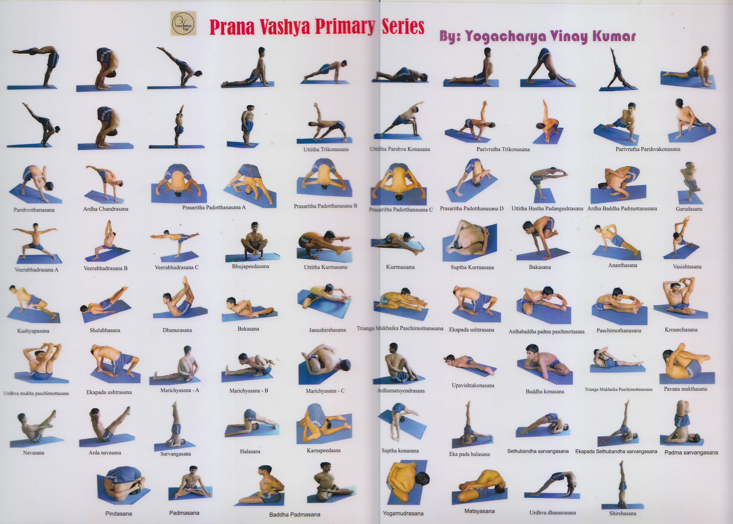 The postures of the Primary Series are completed in one continous flow of movements and breath in sync.