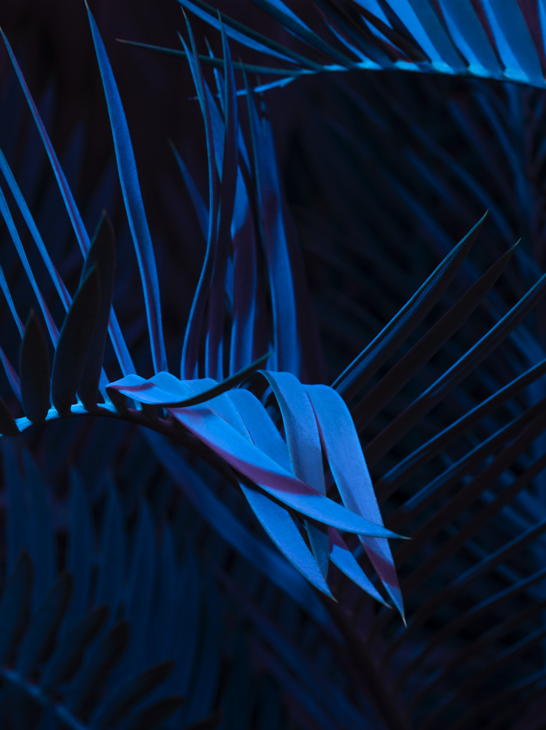 1. Lonneke van der Palen, Jungle Riders, 2018, 60 x 45 cm, pigment print, 1:5, €550,-.png