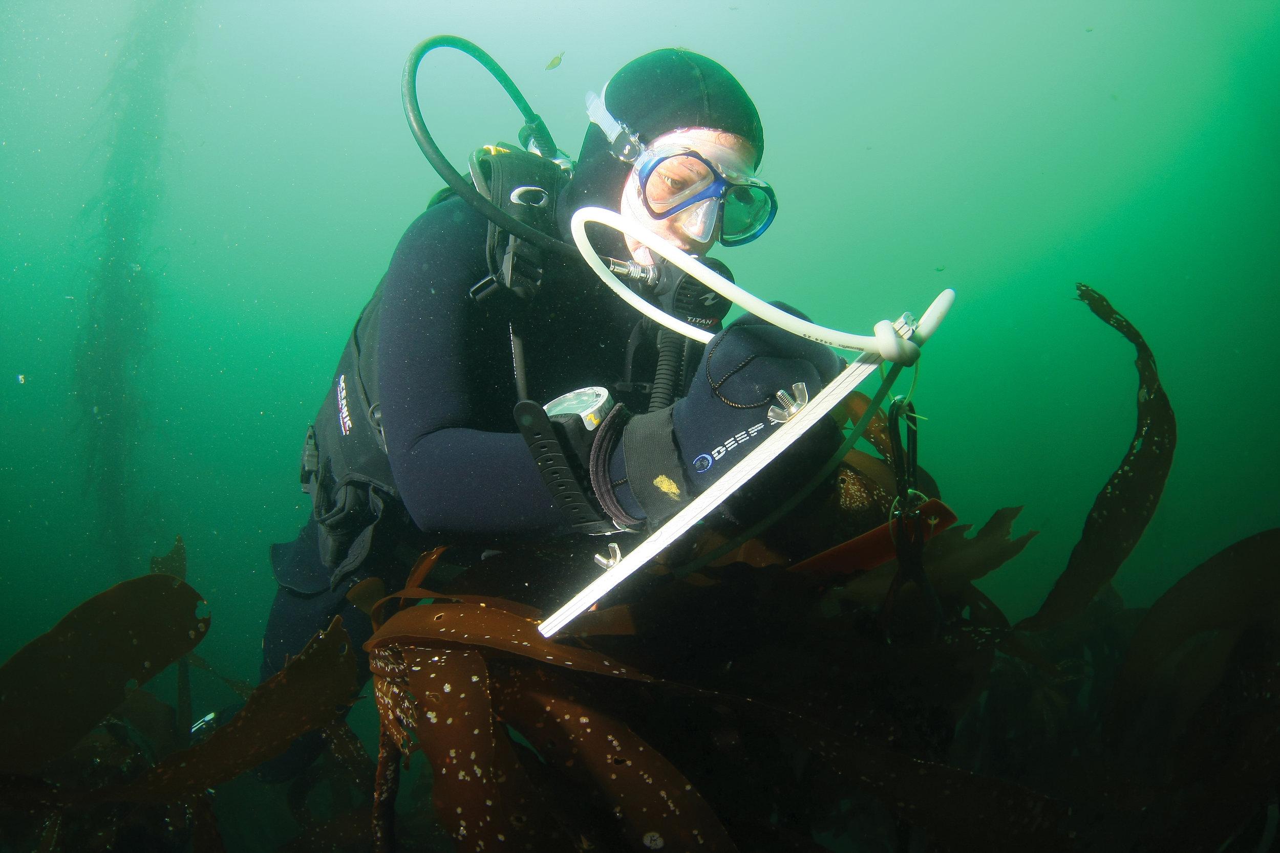 Credit:UT Marine Science Institute