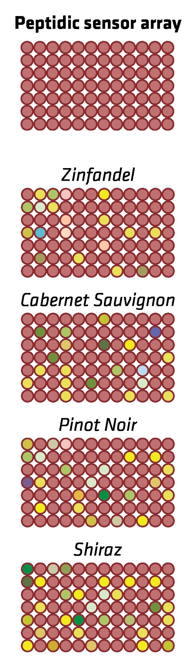 wine graphics-06.png