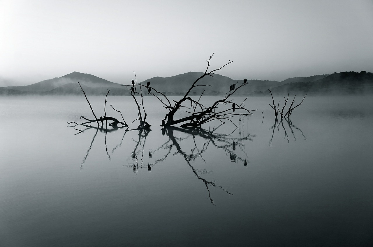nature-reserve-375609_1280.jpg