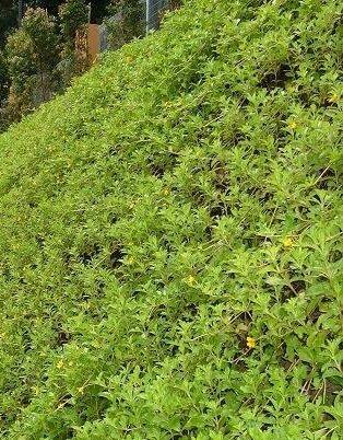 Deltalok+System+-+Green+Wall.jpg