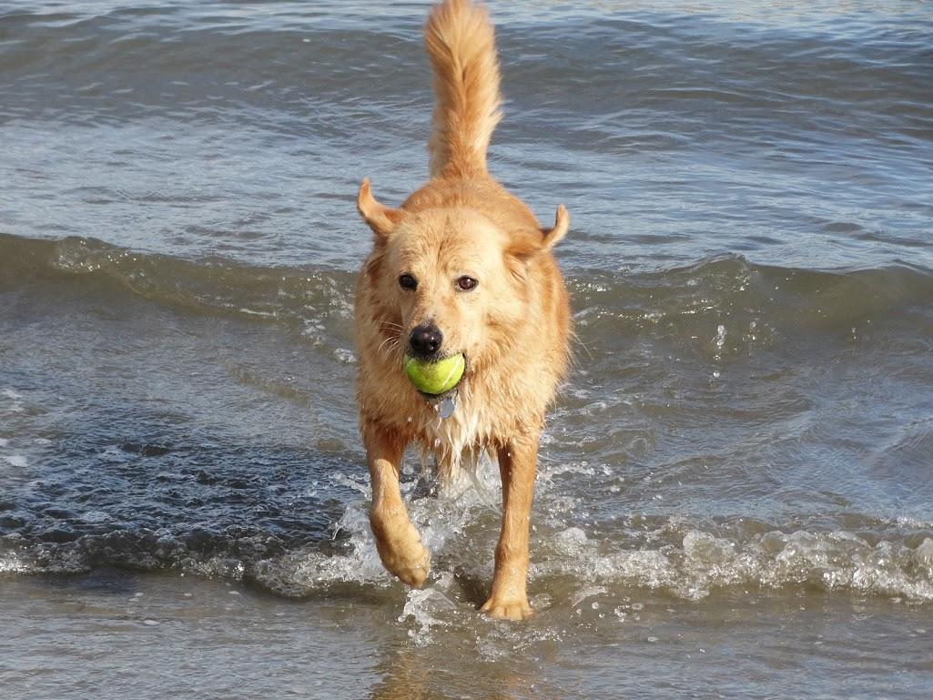 Amber with ball - San Diego.jpg