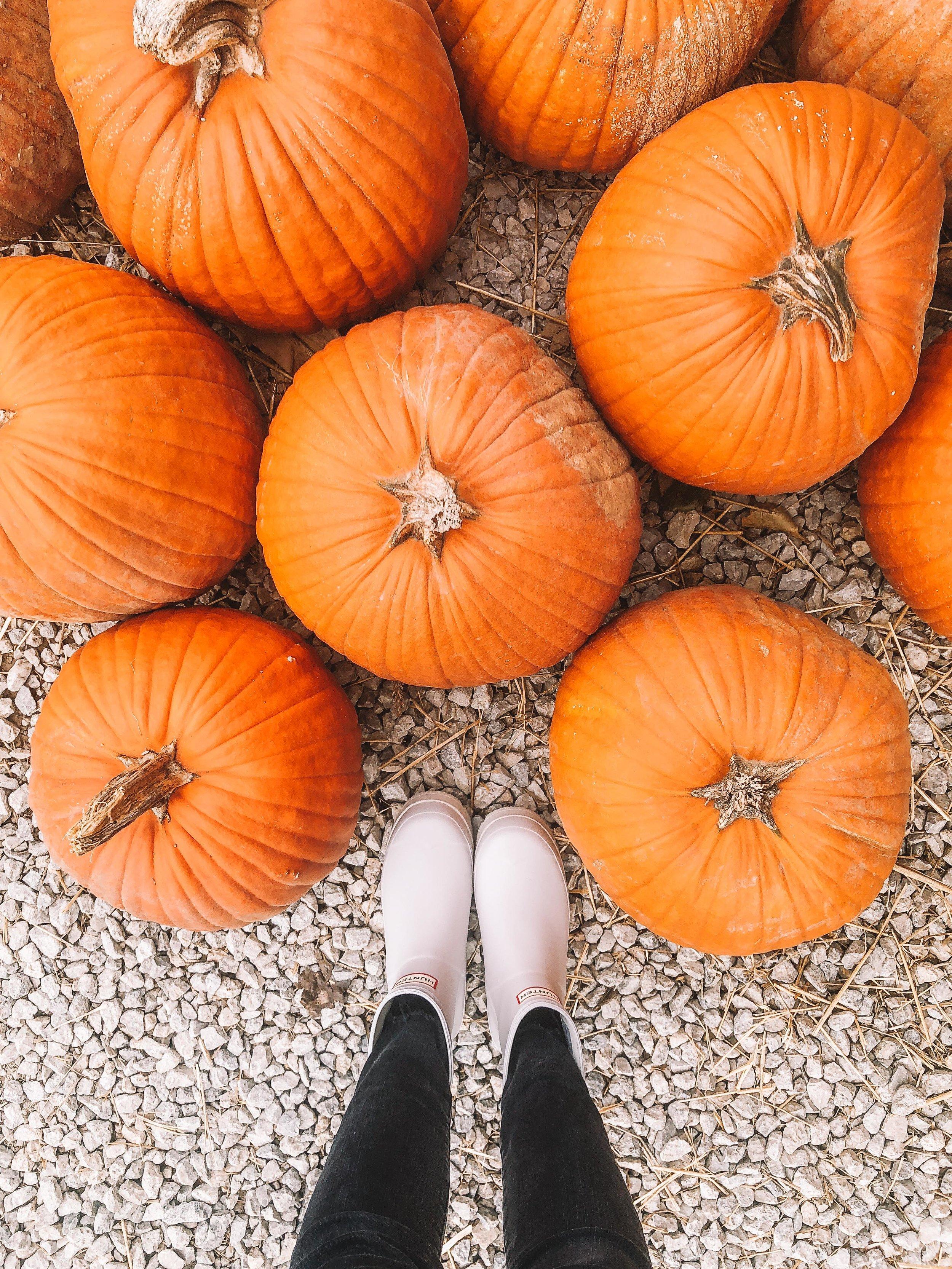 HeyTherePumpkin.jpg